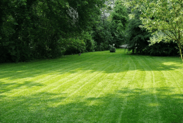 Lawn mowing services devon